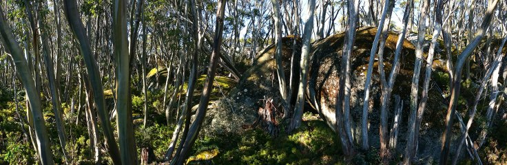 Snowgums and granite boulders