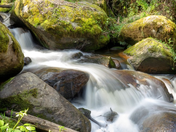 Toorongo Falls Reserve
